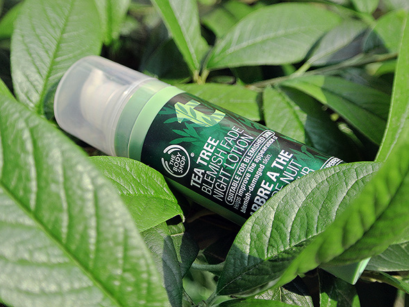 Tinh chất dưỡng da The Body Shop Tea tree Blemish Fade Night Lotion